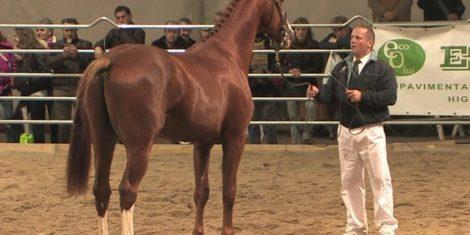 Programma di miglioramento e valorizzazione della produzione ippica selezionata del cavallo di Sardegna Anno 2019