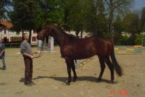 Cavallo da sella, l'ANACAAD risponde al ministro