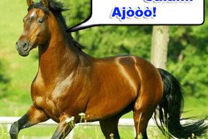 Il turismo a cavallo : tre giorni ad Arborea