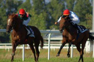 Cavallo anglo arabo sardo, «Il governo tuteli la razza»