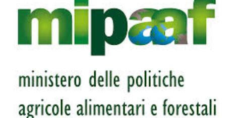 IMPORTI DOVUTI CAVALLO ORIENTALE, ANGLO-ARABO, SELLA ITALIANO