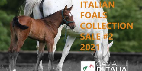I foal Sella Italiano 2021 per il mercato internazionale